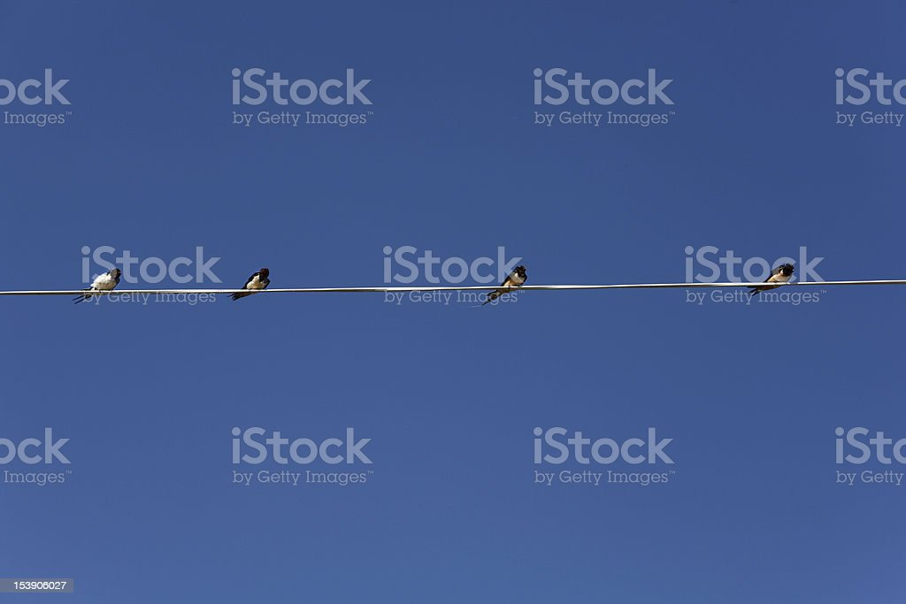 Four little birds sitting on the electric wire royalty-free stock photo