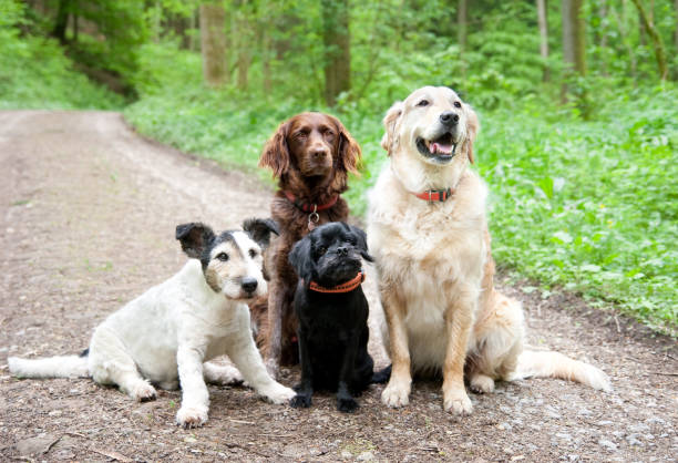 Four old Dogs in the forest stock photo