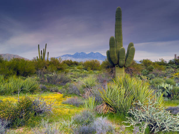 Four Peaks Tonto National Forest, Arizona national forest stock pictures, royalty-free photos & images
