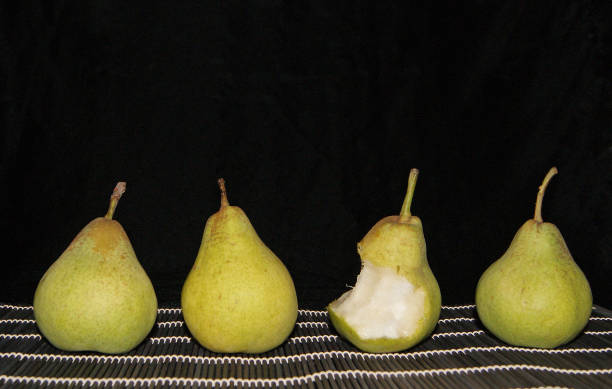 Fyra päron bildbanksfoto