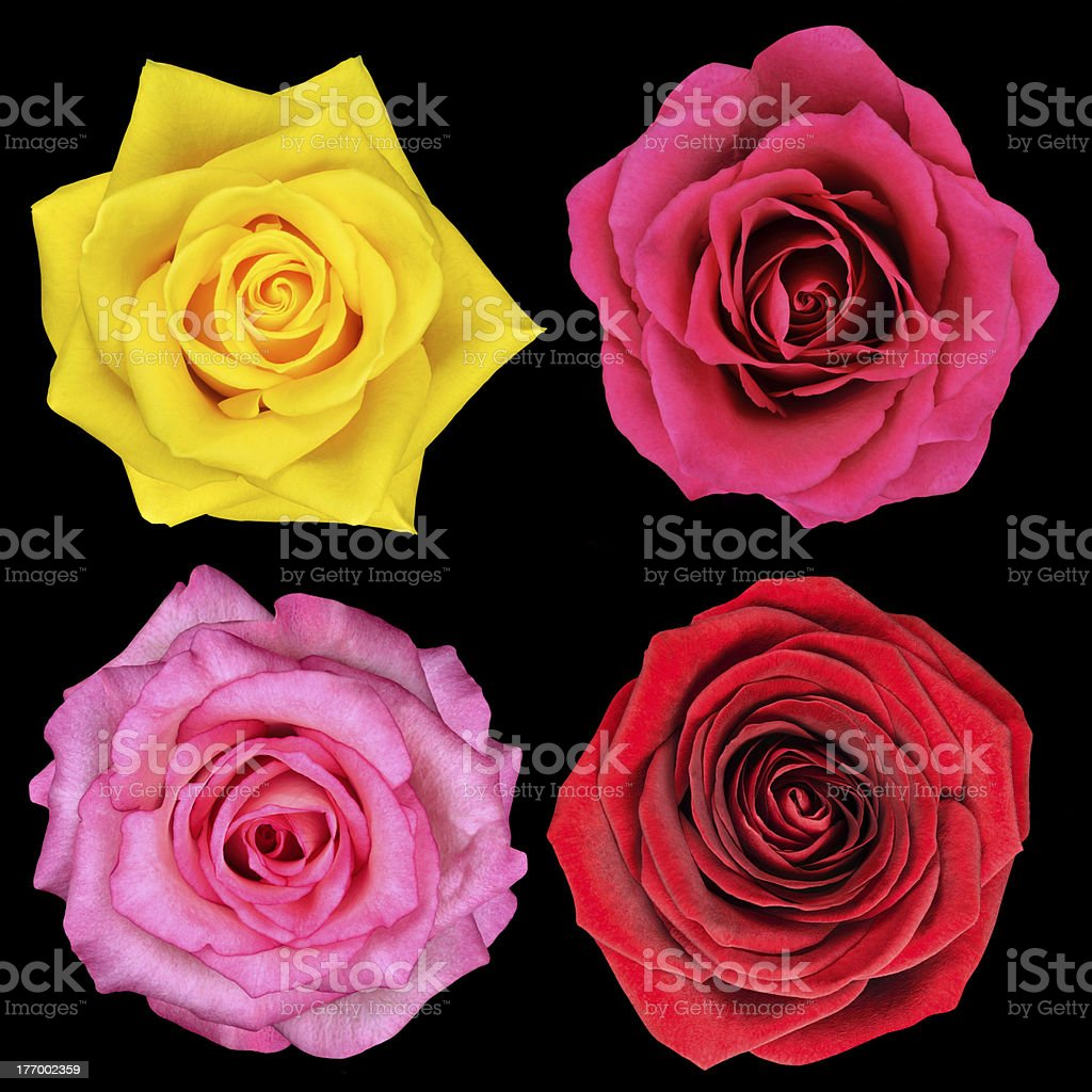 Four Perfect Rose Flower Isolated on Black BackgroundPlease see...