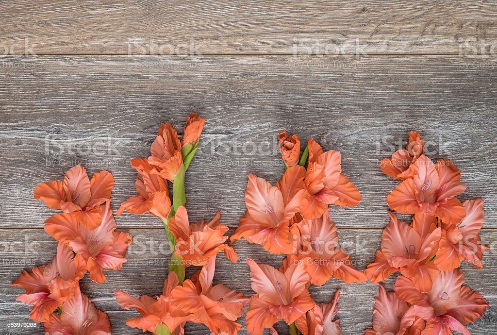 Four pink gladiolus. stock photo