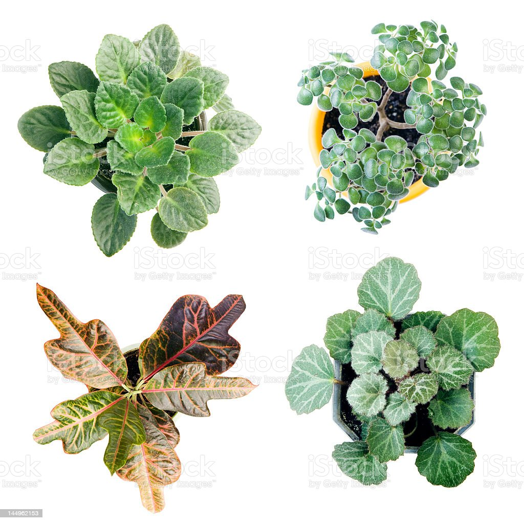 Four plant royalty-free stock photo