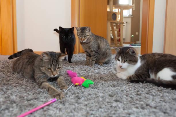 Four playful cats lyingstanding on carpet closeup picture id933104810?b=1&k=6&m=933104810&s=612x612&w=0&h=54m 0jfm3snkbhtzfhd3zma4nsmi8muqanbspvogwsa=