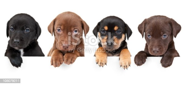 istock Four puppies above banner 105079211