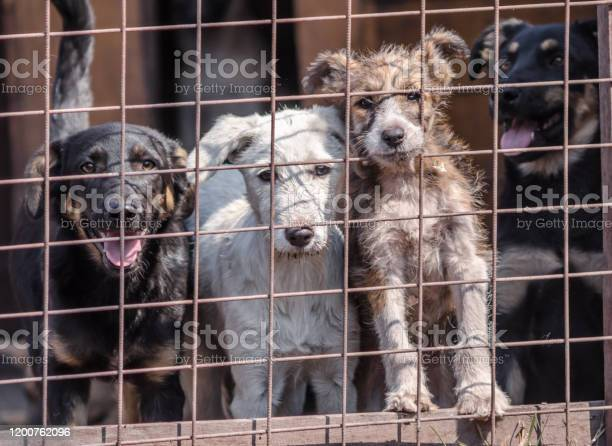 Four puppies behind bars in a cage picture id1200762096?b=1&k=6&m=1200762096&s=612x612&h=re3jbcbas0kxujvvpo1lgehavznuc5zfb1bpx9jzcgw=