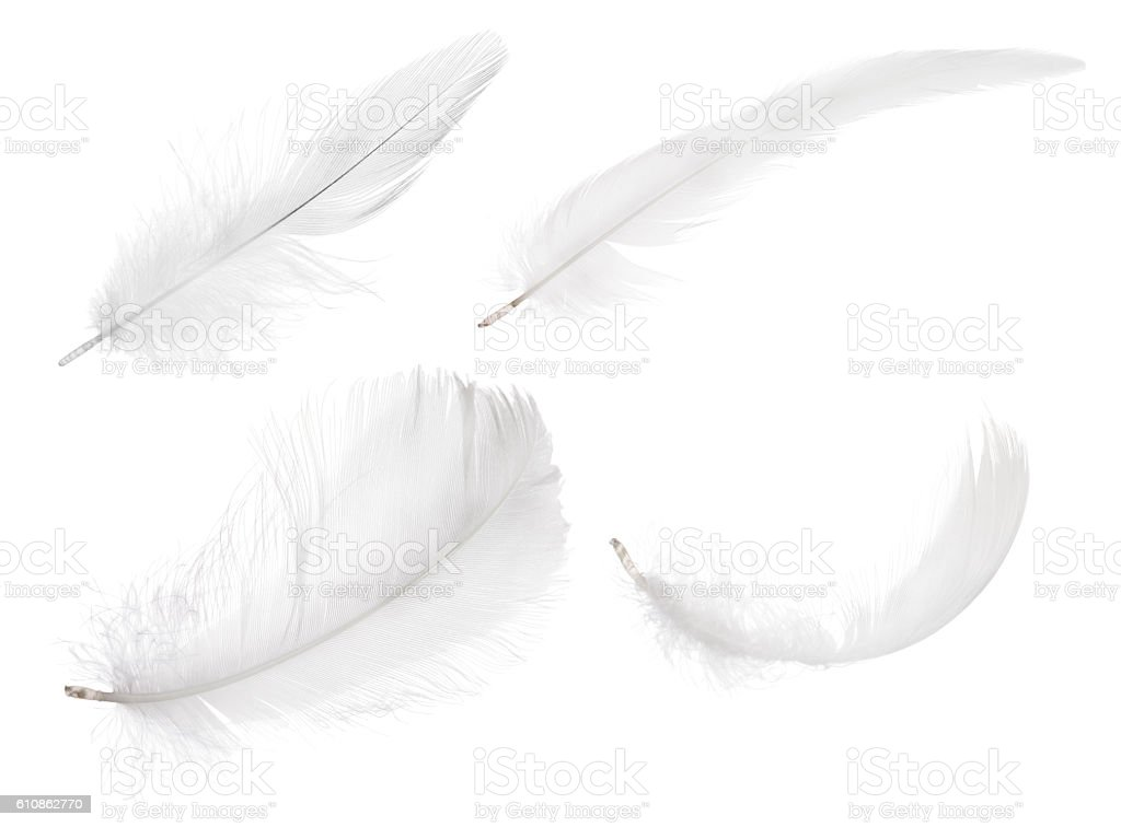 four pure white isolated feathers stock photo