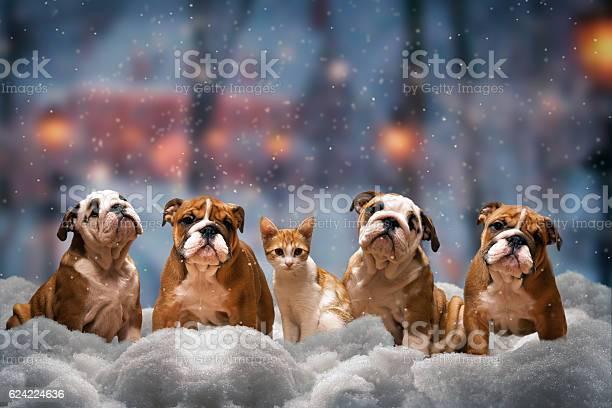 Four red dog picture id624224636?b=1&k=6&m=624224636&s=612x612&h=2pqdhs3xy8fc5ru4 bswa 4ygd7enhyfw 0xnfpfvug=