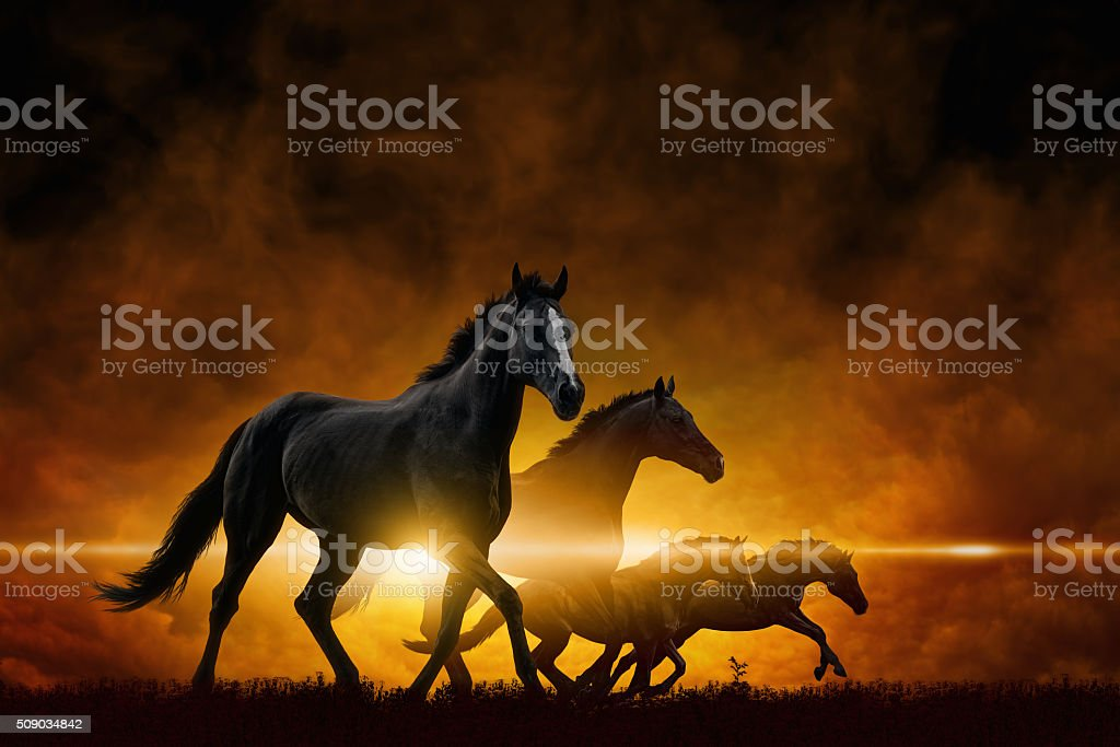 Four running black horses stock photo