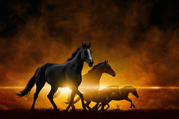 Cztery biegania czarne konie – zdjęcie