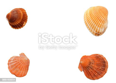 Four seashells isolated on white background with copy space. View from above.