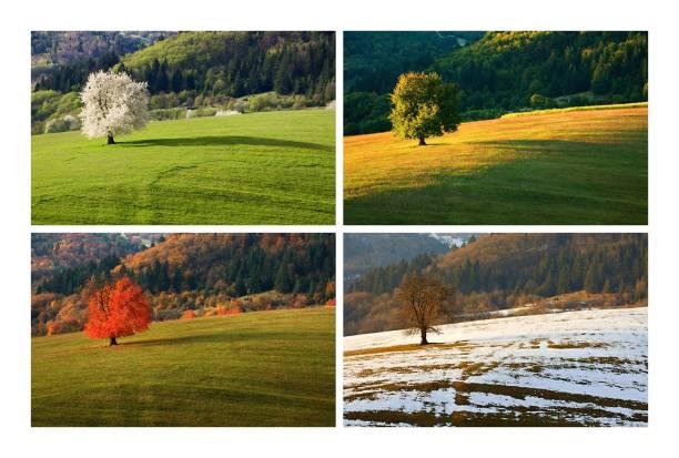 cztery sezony wiśniowe drzewo - four seasons zdjęcia i obrazy z banku zdjęć
