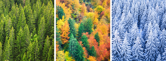 Aerial view on multi colored forest in changing season.