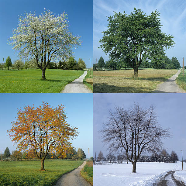 four season (image size xxl) - four seasons 個照片及圖片檔