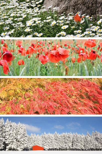 four season: spring, summer, autumn and winter - four seasons zdjęcia i obrazy z banku zdjęć