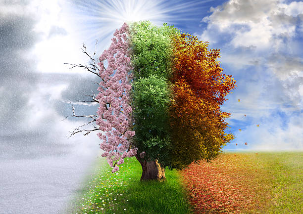 four season tree, photo manipulation, magical, nature - changing form stock pictures, royalty-free photos & images