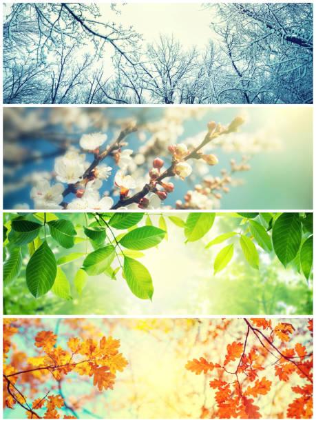cztery sezony. zdjęcia przedstawiające cztery różne zdjęcia przedstawiające cztery pory roku: wiosna, lato, jesień i zima - four seasons zdjęcia i obrazy z banku zdjęć