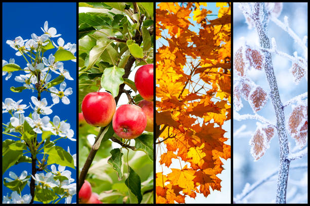 Four Seasons Collage Collage of four pictures representing each season: spring, summer, autumn and winter. four seasons stock pictures, royalty-free photos & images