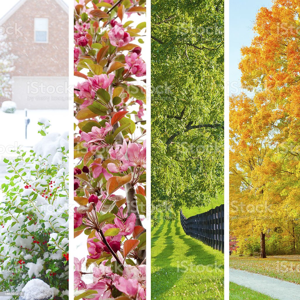 Four seasons collage royalty-free stock photo