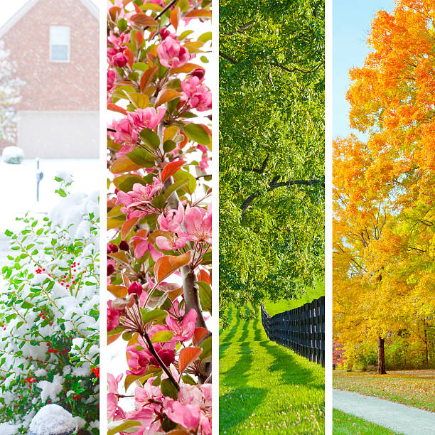 four seasons collage - four seasons stock photos and pictures