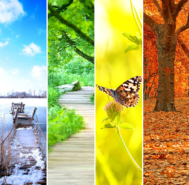four seasons collage four seasons collage, several images of beautiful natural landscapes at different time of the year - winter spring, summer, autumn, planet earth life cycle concept four seasons stock pictures, royalty-free photos & images
