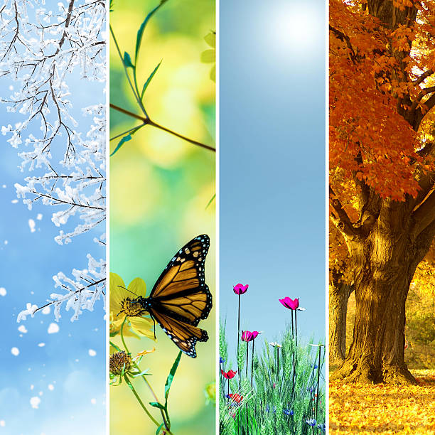 Four seasons collage Four seasons collage, several images of beautiful natural landscapes at different time of the year - winter spring, summer, autumn, planet earth life cycle concept. four seasons stock pictures, royalty-free photos & images
