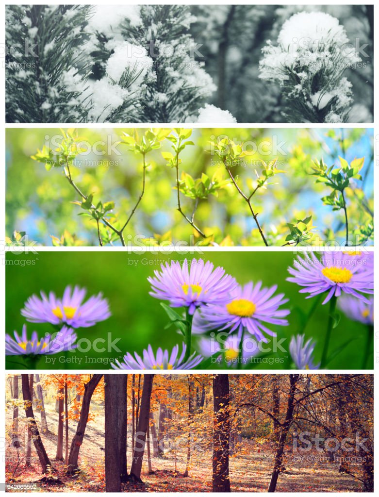 four seasons conceptual collage stock photo