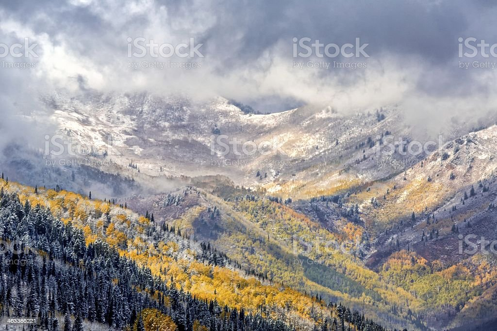 Four Seasons in One stock photo