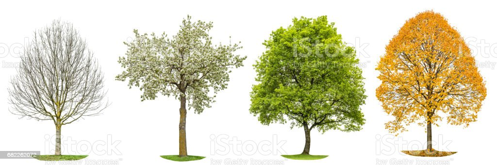 Four seasons nature Tree silhouette isolated - Photo