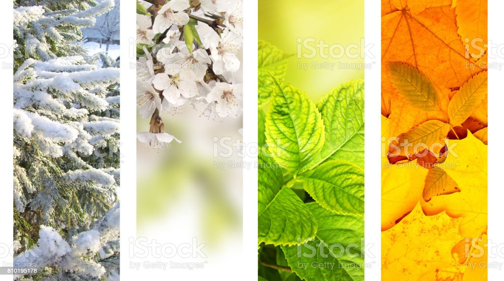 Four seasons of year stock photo