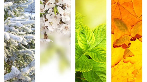 Four seasons of year Four seasons of year. Vertical nature banners with winter, spring, summer and autumn scenes four seasons stock pictures, royalty-free photos & images