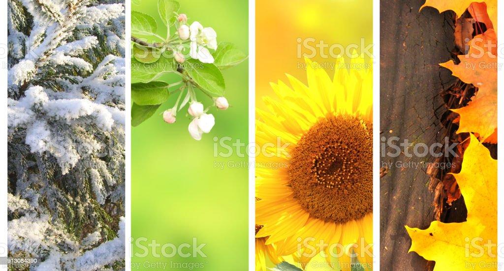 Four seasons of year stock photo