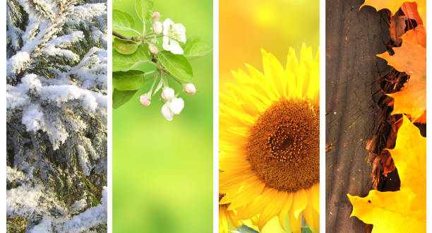 Four seasons of year Four seasons of year. Collection of vertical nature banners with winter, spring, summer and autumn scenes four seasons stock pictures, royalty-free photos & images