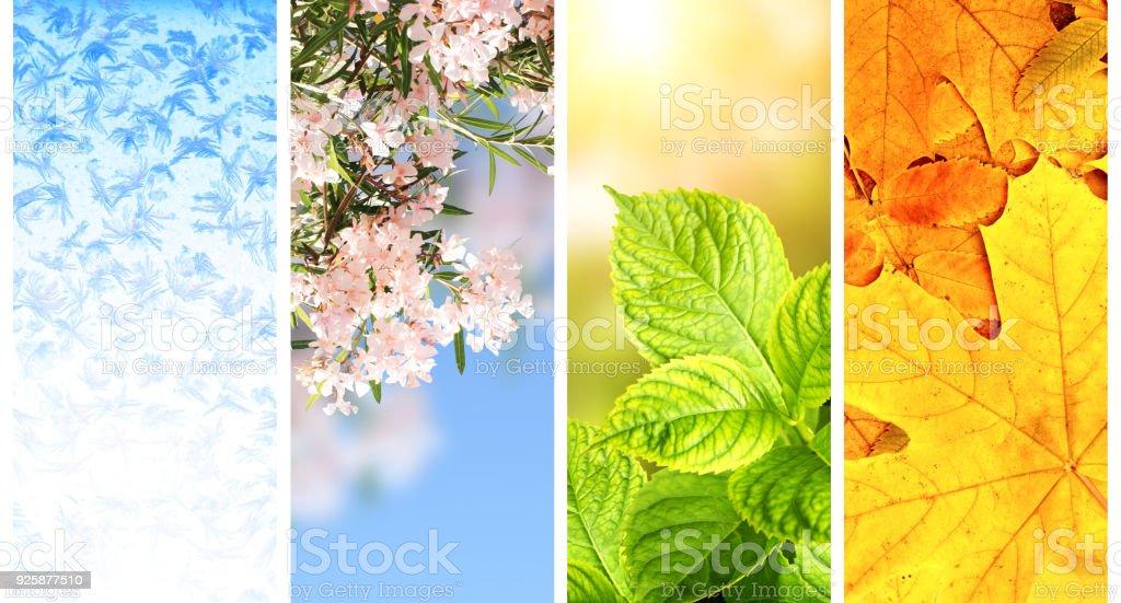 四季の年 - オレンジ色のロイヤリティフリーストックフォト