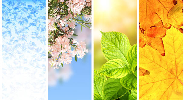 Four seasons of year Four seasons of year. Set of vertical nature banners with winter, spring, summer and autumn scenes four seasons stock pictures, royalty-free photos & images