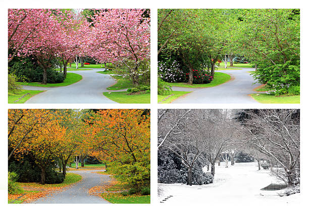 four seasons on the same street. - four seasons 個照片及圖片檔