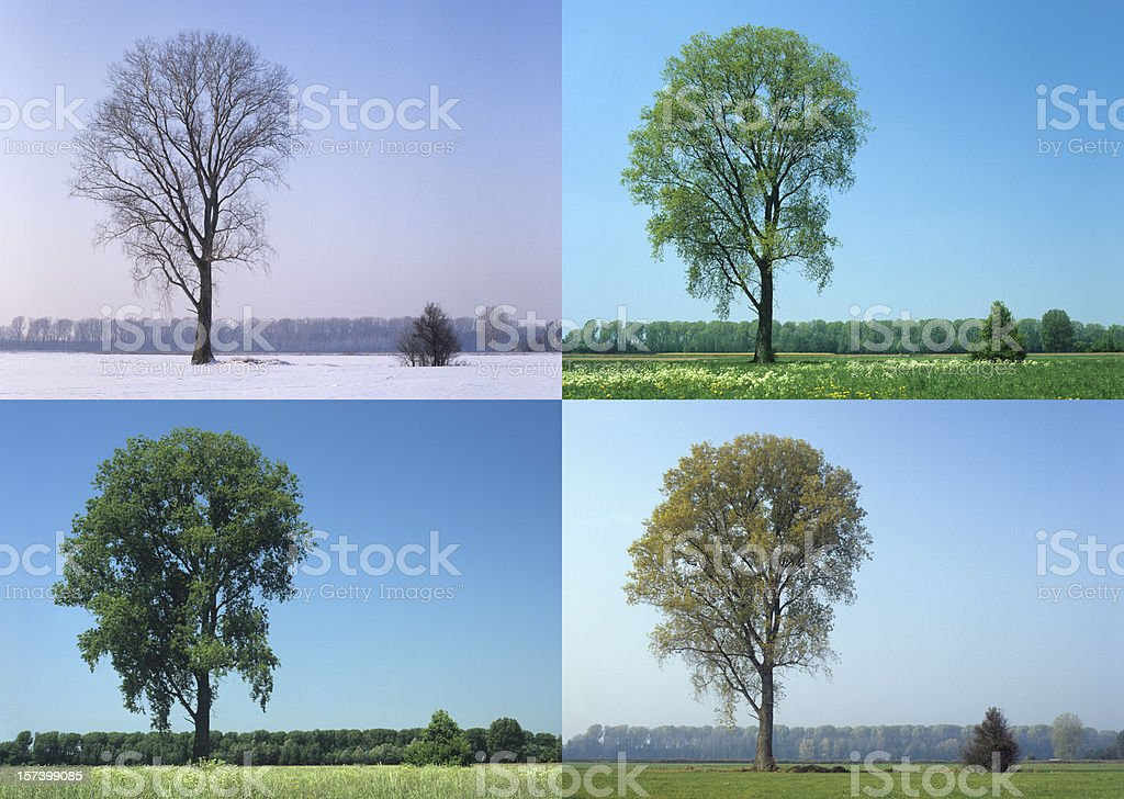 Four Seasons (image size XXL) stock photo