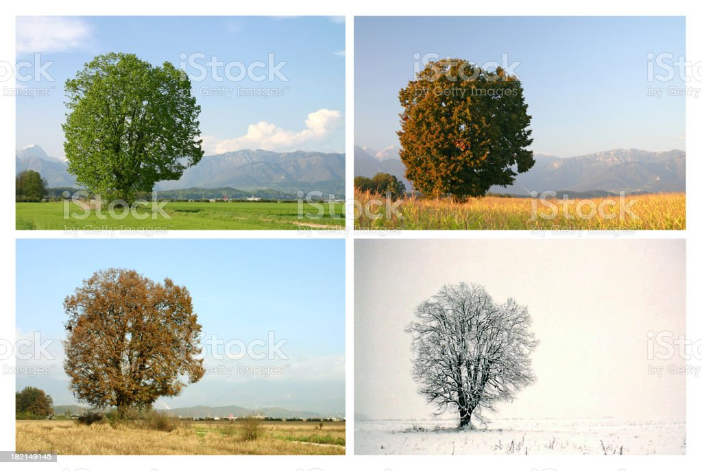 Four seasons #1 stock photo