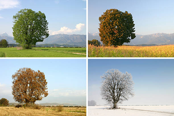 four seasons - four seasons stock photos and pictures