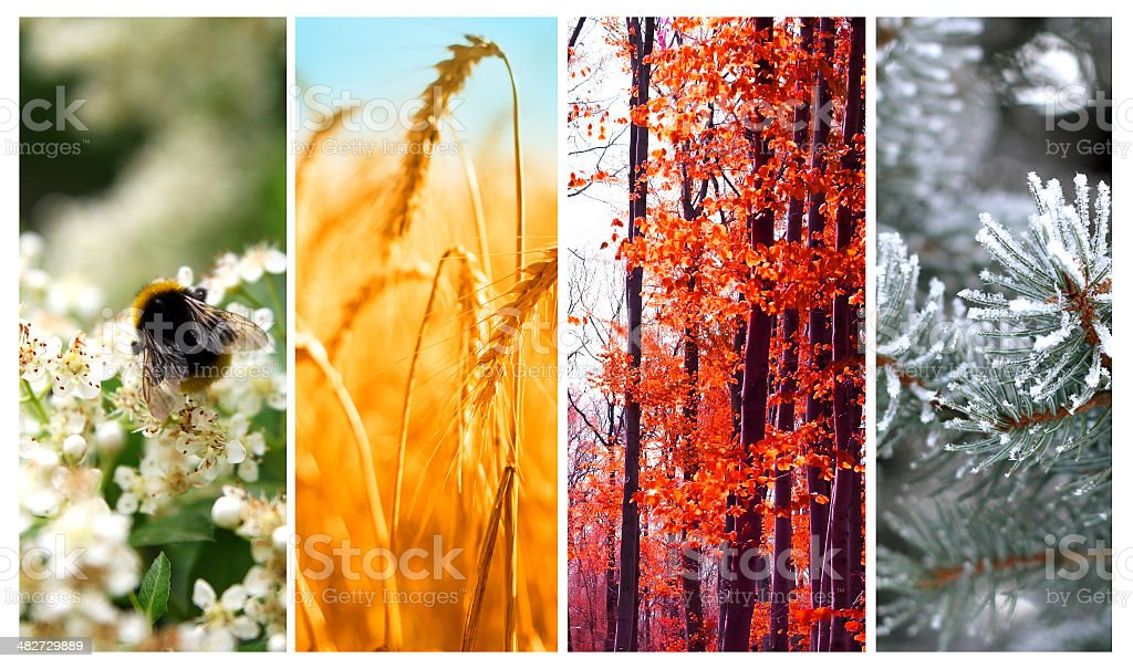 Four seasons: Spring, summer, autumn and winter stock photo