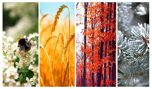 four seasons: spring, summer, autumn and winter - four seasons 個照片及圖片檔