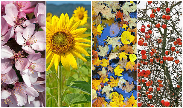 Four seasons. Spring, summer, autumn, winter. Four seasons. Nature in spring, summer, autumn and winter. four seasons stock pictures, royalty-free photos & images