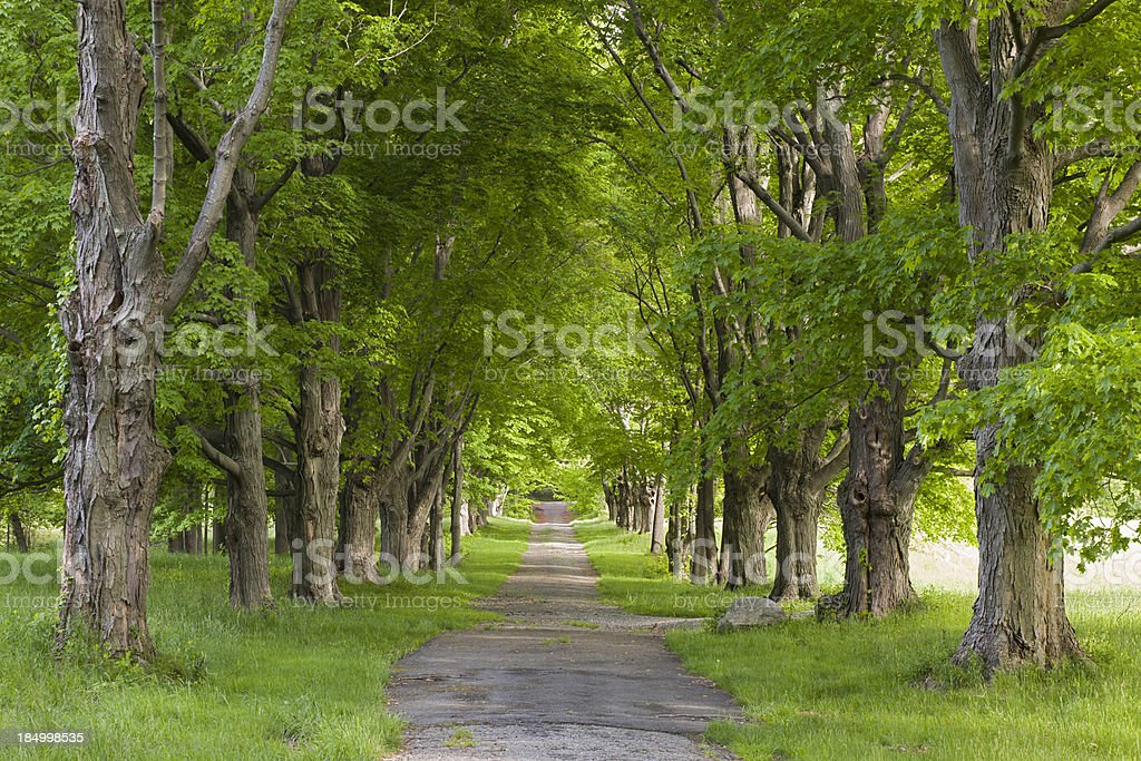Four Seasons Tree Alley - Summer royalty-free stock photo