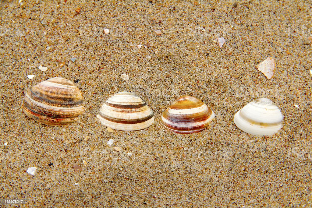 four shells stock photo