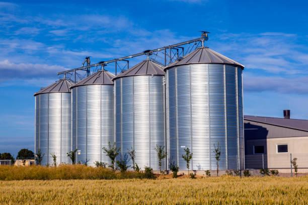 four silver silos in corn field stock photo