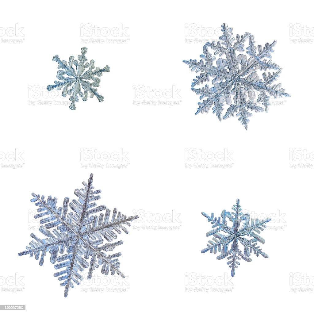 Four snowflakes isolated on white background stock photo