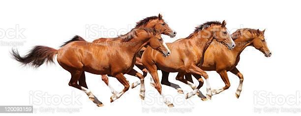 Four sorrel stallion gallop picture id120093159?b=1&k=6&m=120093159&s=612x612&h=ebpso1ko6xjbddh0kxguu w7ghfgsuqek6mdhm0jkz0=