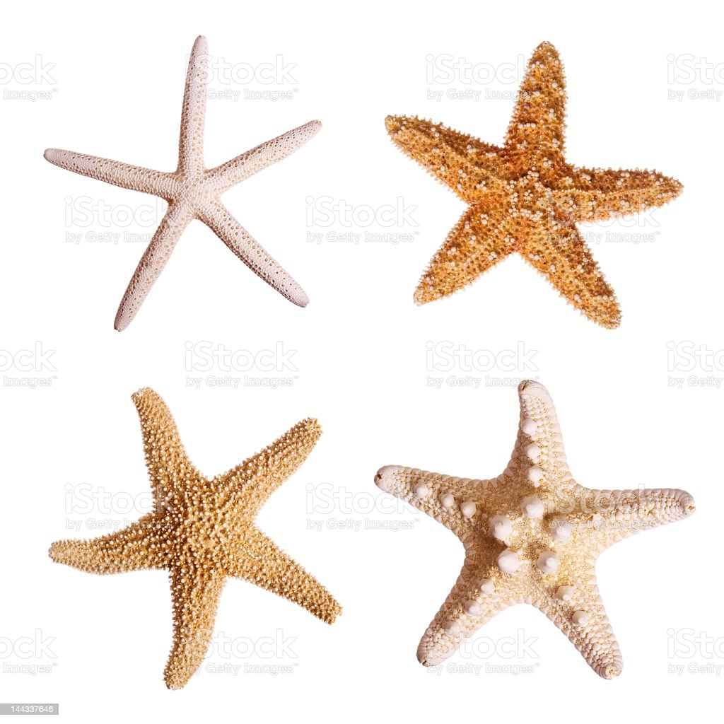 Four starfish against white background stock photo