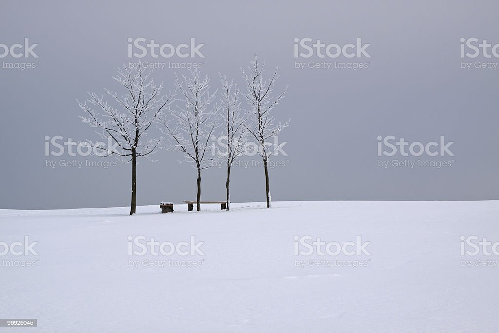 four trees in snow royalty-free stock photo
