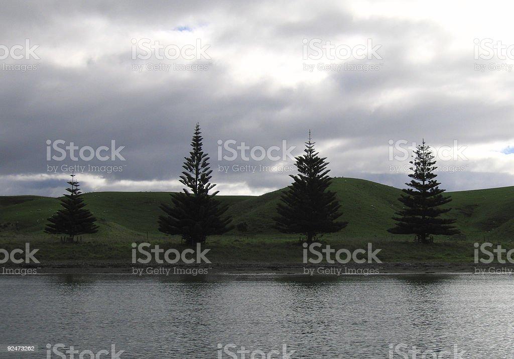 four trees on Motutapu island royalty-free stock photo